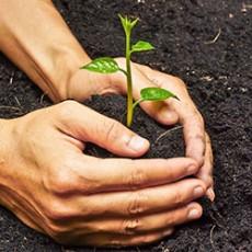 Plant & Lawn Care