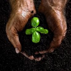 Compost, Topsoil & Mulch